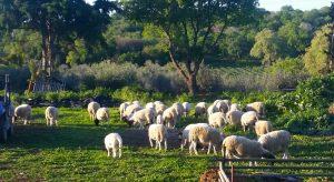 מעבדות לחירות ואיך זה קשור לחקלאות ישראלית?