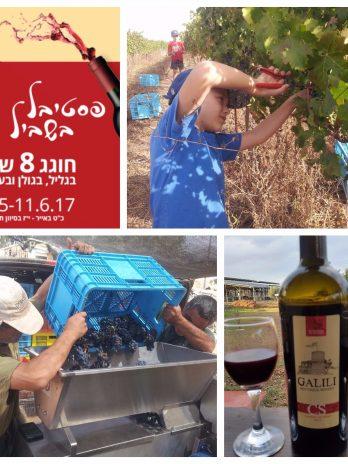 יין קברנה סוביניון 2016